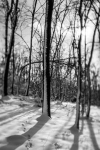 Mala šumska šetnica  - © Janko Belaj