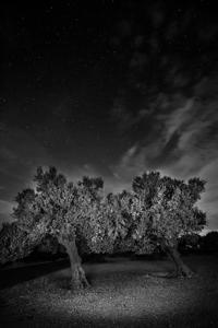 Noć u Lunjskom masliniku  - © Janko Belaj