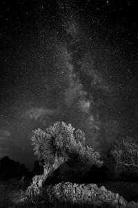 Kumova slama  - © Janko Belaj