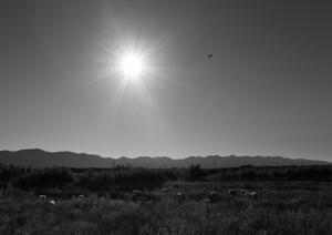Jutarnji pozdrav pupavca  - © Janko Belaj