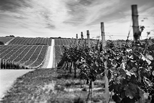 Baranjsko vino za kneževski ručak  - © Janko Belaj