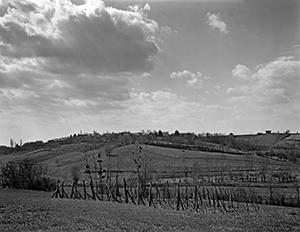 Vines of Belec  - © Janko Belaj
