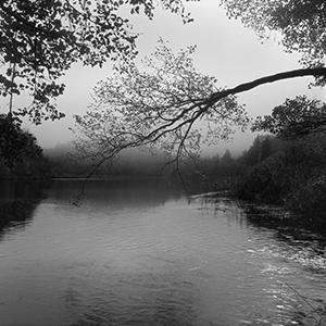 Dobro jutro maglo!  - © Janko Belaj