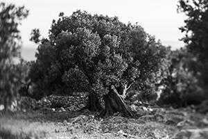 Drvo kamen  - © Janko Belaj
