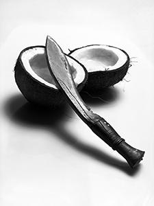 Coconut Liquor before Fermentation  - © Janko Belaj