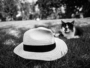 Mačka i lopta  - © Janko Belaj