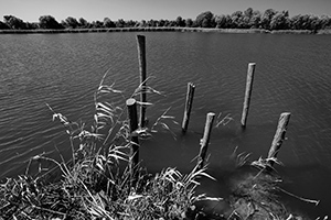 Obale Malog Dunava  - © Janko Belaj