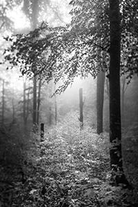 Plitvice  - © Janko Belaj