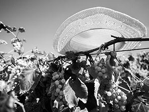 U vinogradu  - © Janko Belaj