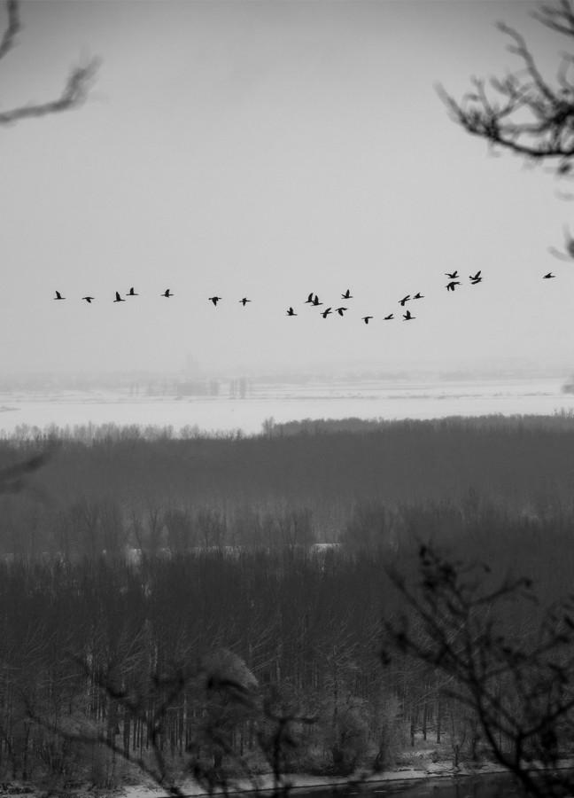 2010-01-31--Erdut-1319438.jpg - © Janko Belaj