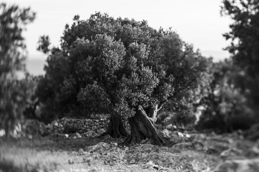 DrvoKamen.jpg - © Janko Belaj