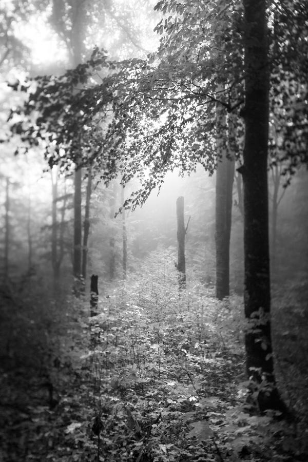 Plitvice.jpg - © Janko Belaj
